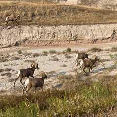 South Dakota - Selected Hoptale Photos