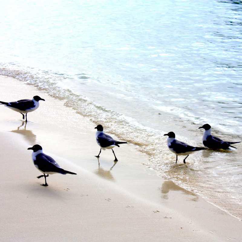 Secret Harbor Beach