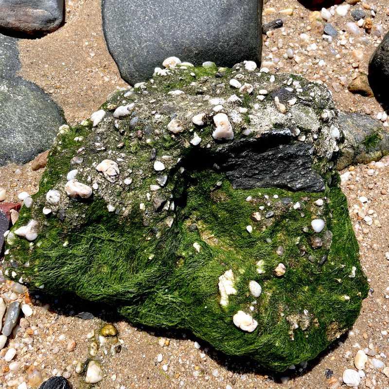 Secret Beach @ Sands Point Preserve