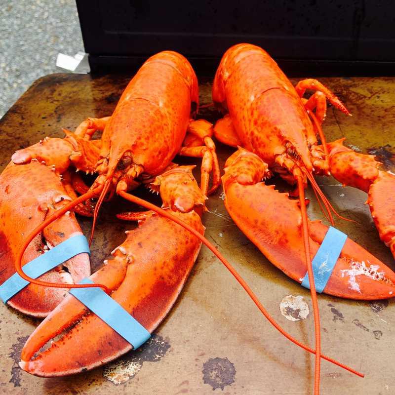 Lobster Sale