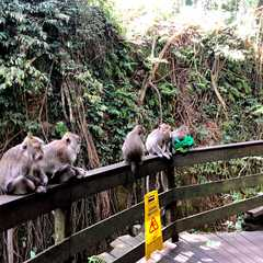 Sacred Monkey Forest Sanctuary   Travel Photos, Ratings & Other Practical Information