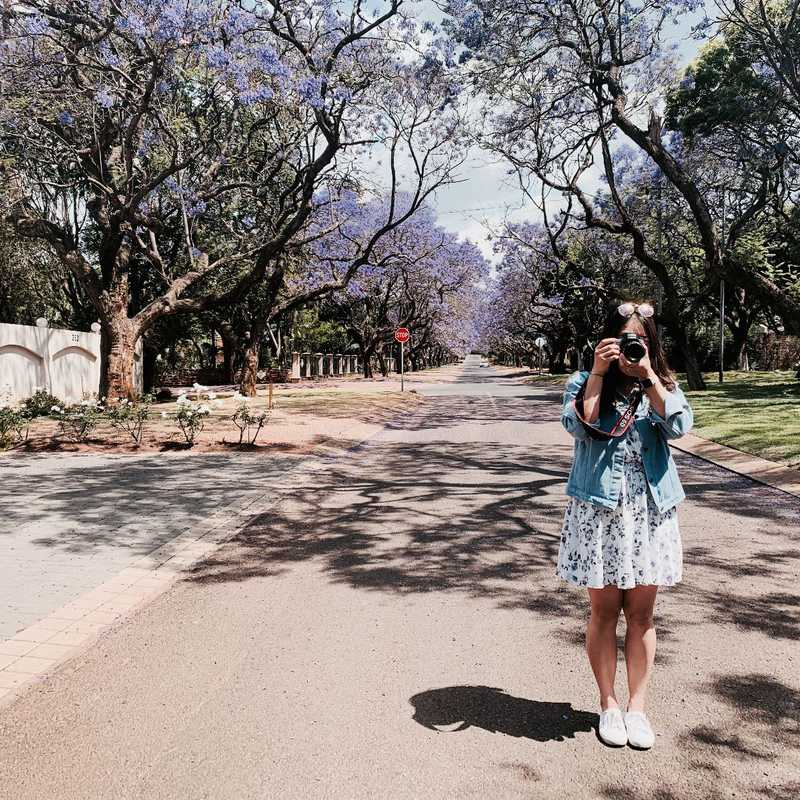 Trip Blog Post by @Ciindy.W_: Jacaranda in Pretoria 2019 | 1 day in Oct (itinerary, map & gallery)