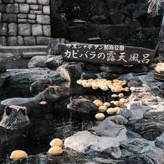 伊豆シャボテン動物公園 | POPULAR Trips, Photos, Ratings & Practical Information