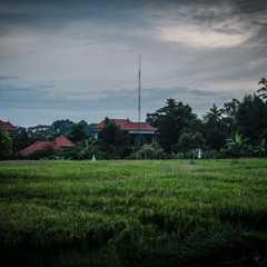 Ubud | POPULAR Trips, Photos, Ratings & Practical Information