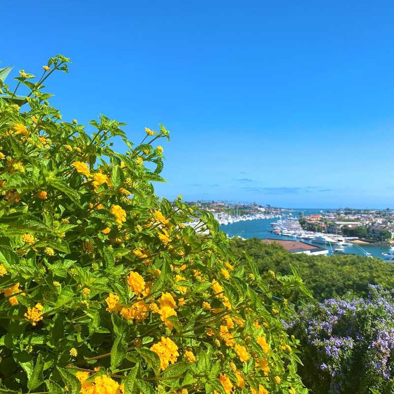 House Tour - Newport Beach Ocean View