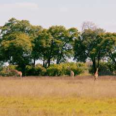 Vumbura Plains Camp - Photos by Real Travelers, Ratings, and Other Practical Information