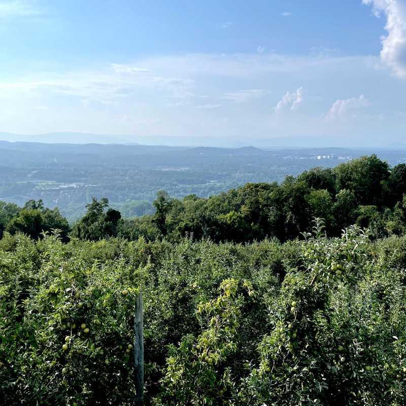 Carter Mountain Orchard