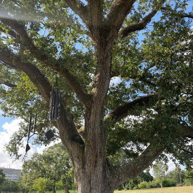 The Singing Oak: Round #1