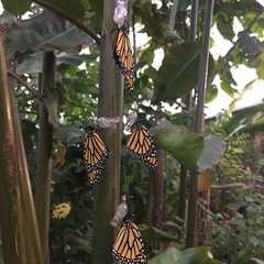 Mariposario de Benalmádena-Butterfly Park