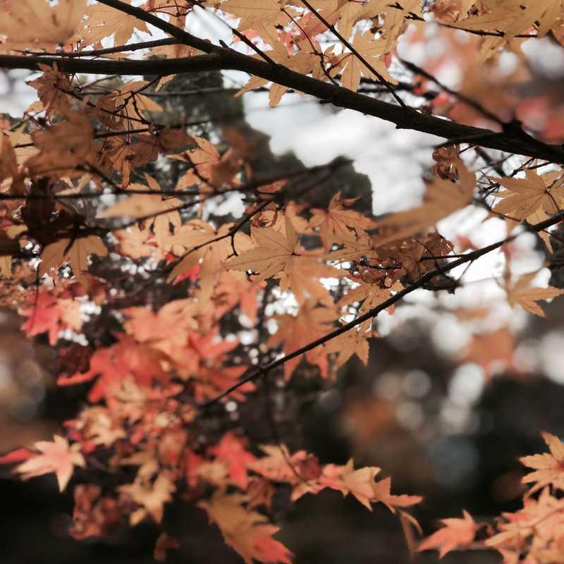 四王寺山・ 太宰府 - Shiojiyama & Dazaifu | 1 day trip itinerary, map & gallery
