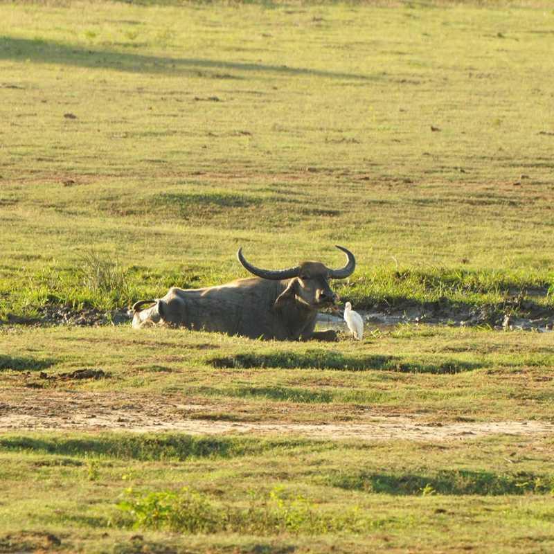 Yala national park-Sri Lanka