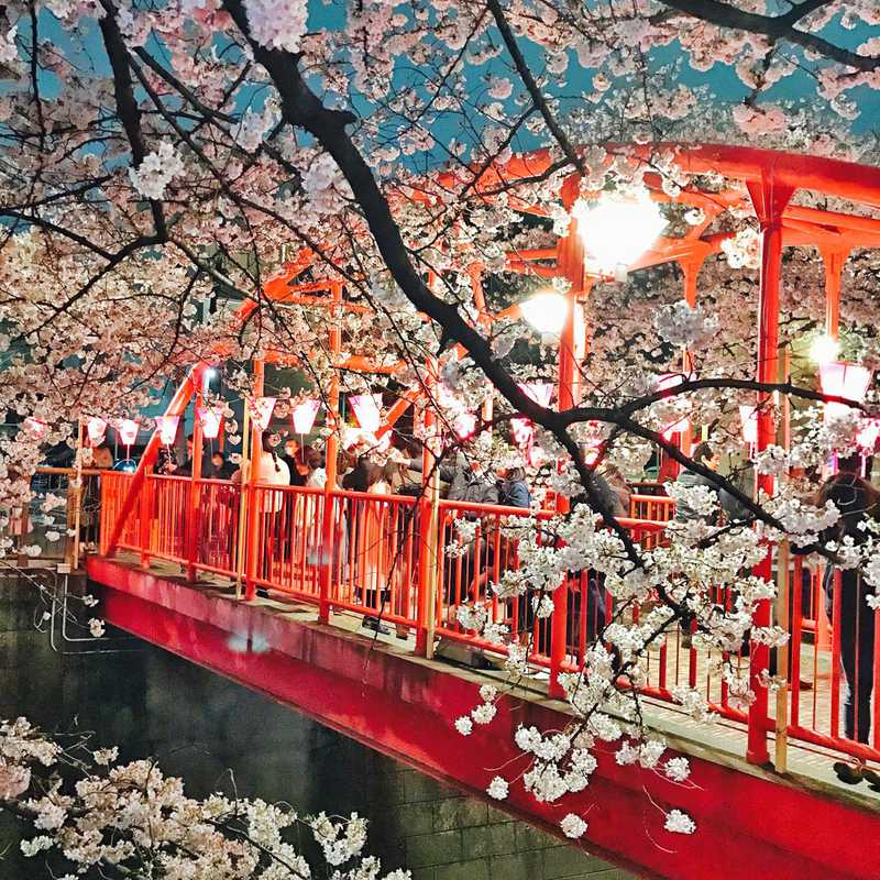 Tokyo Spring | 3 days trip itinerary, map & gallery