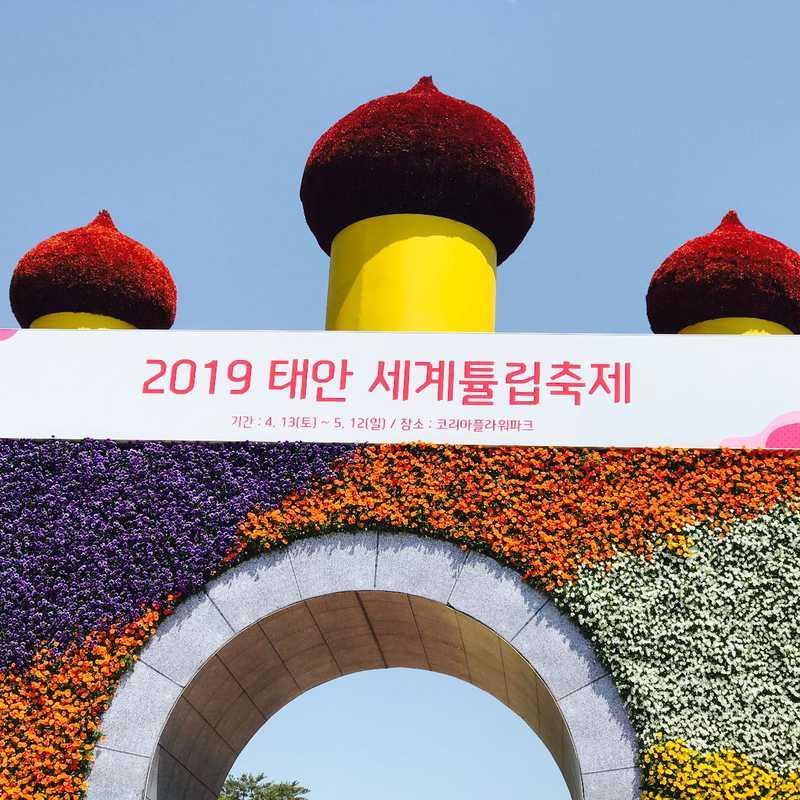 Taean Tulip Festival