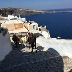 Castle of Oia | POPULAR Trips, Photos, Ratings & Practical Information