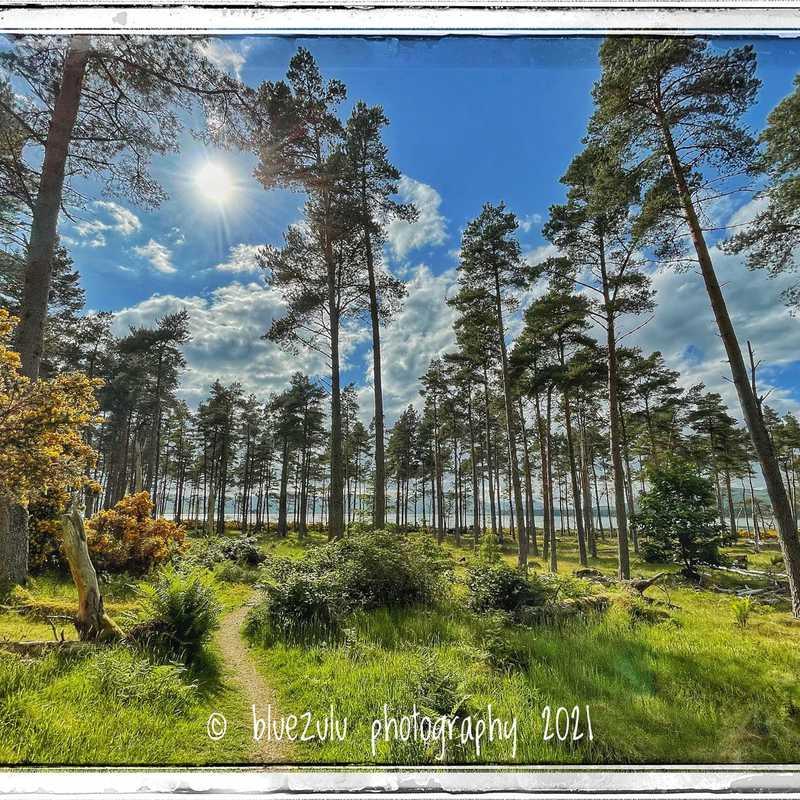 Littleferry Woods