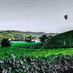 Piedmont - Selected Hoptale Photos
