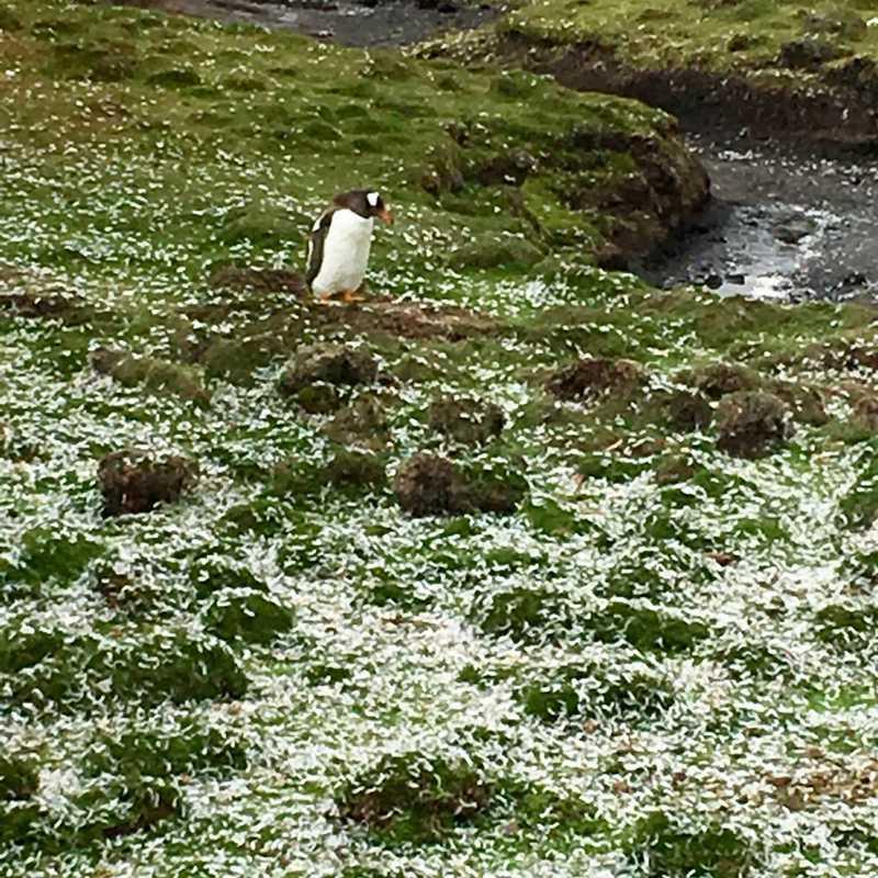 Bluff Cove Lagoon Penguin Tour
