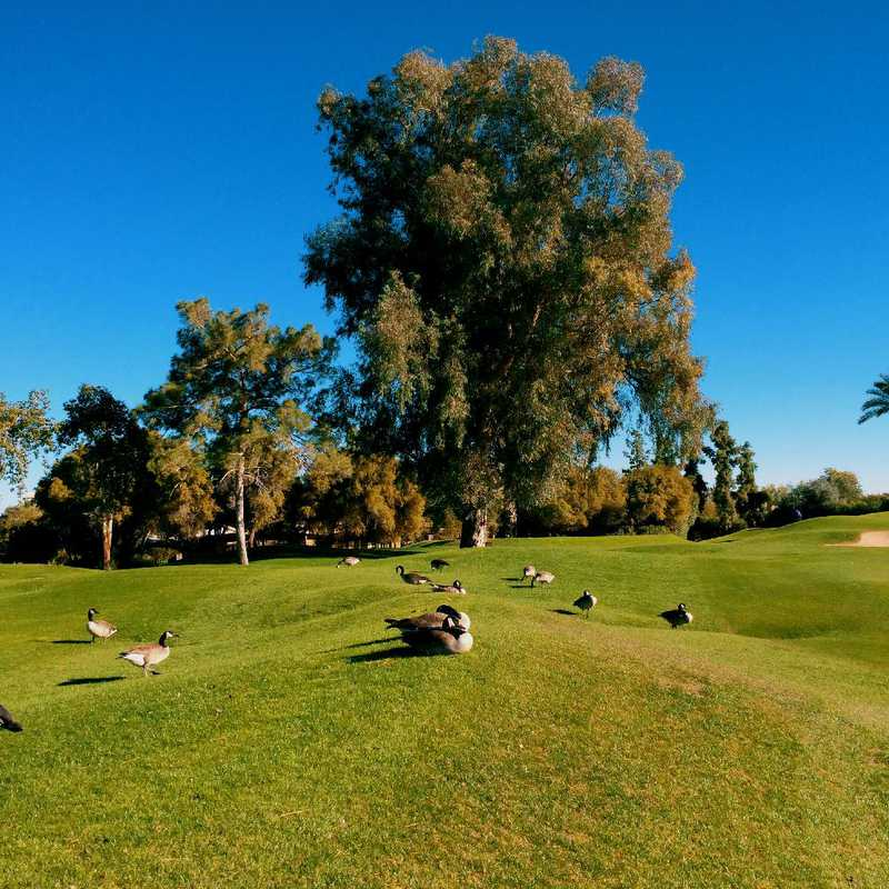 Play at The Phoenician Golf Club