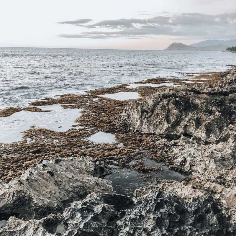 Carole's Cove