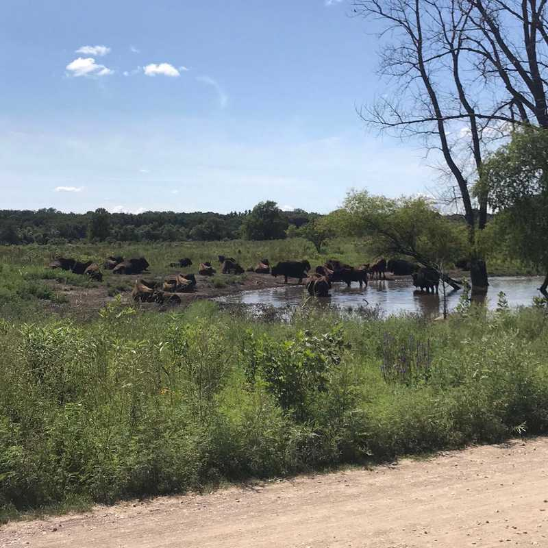 Minneopa State Park Bison Drive