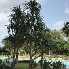 Laguna Garden Hotel Okinawa - Photos by Real Travelers, Ratings, and Other Practical Information