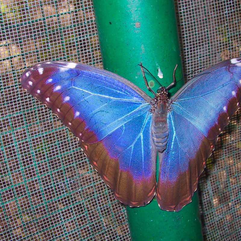 Fallen Stones Butterfly Farm