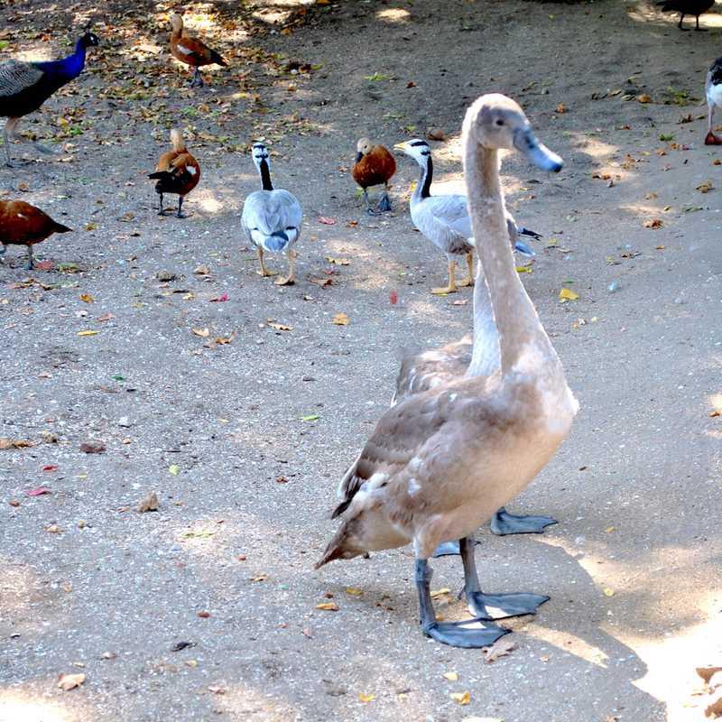 Askania Nova zoological park