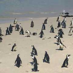 Boulders Beach - Photos by Real Travelers, Ratings, and Other Practical Information