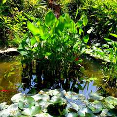 Jardí Botànic Marimurtra