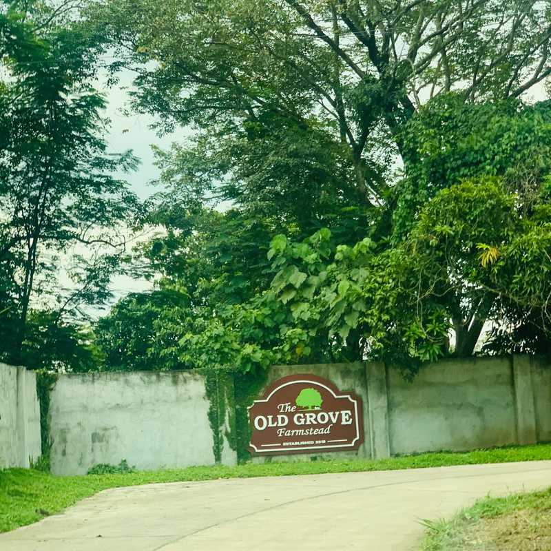 The Old Grove Farmstead