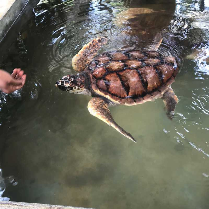 The Turtle Research Project