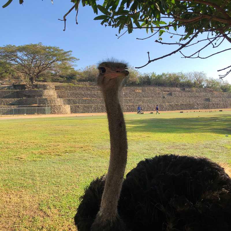 Baluarte Resort and Mini Zoo