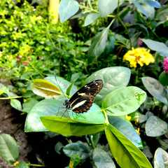 Audubon Butterfly Garden and Insectarium - Photos by Real Travelers, Ratings, and Other Practical Information