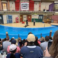 SeaWorld San Diego - Photos by Real Travelers, Ratings, and Other Practical Information