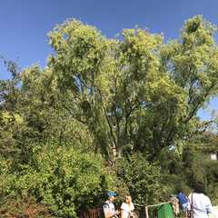 Giverny   POPULAR Trips, Photos, Ratings & Practical Information
