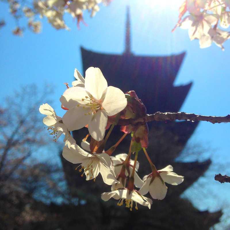 To-ji Temple