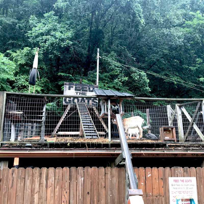 Kentucky Reptile Zoo