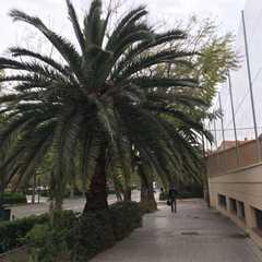 Estadi Ciutat de València