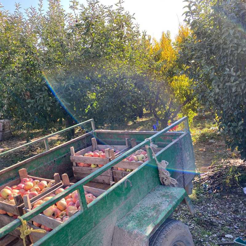 Elma Bahçesi