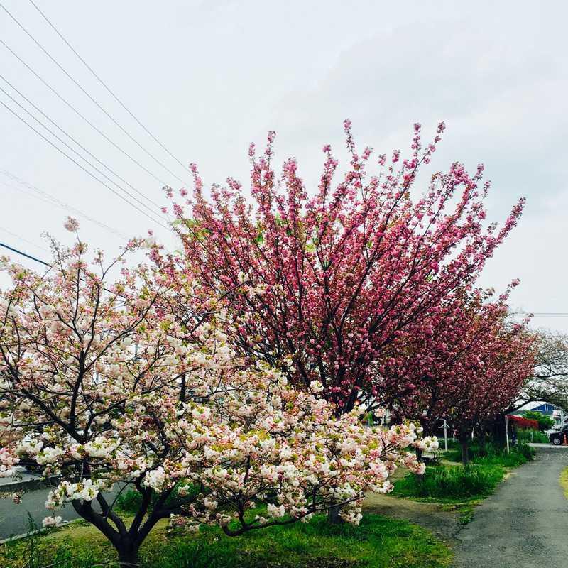 Asaka Shiritsu Hamasaki Nursery