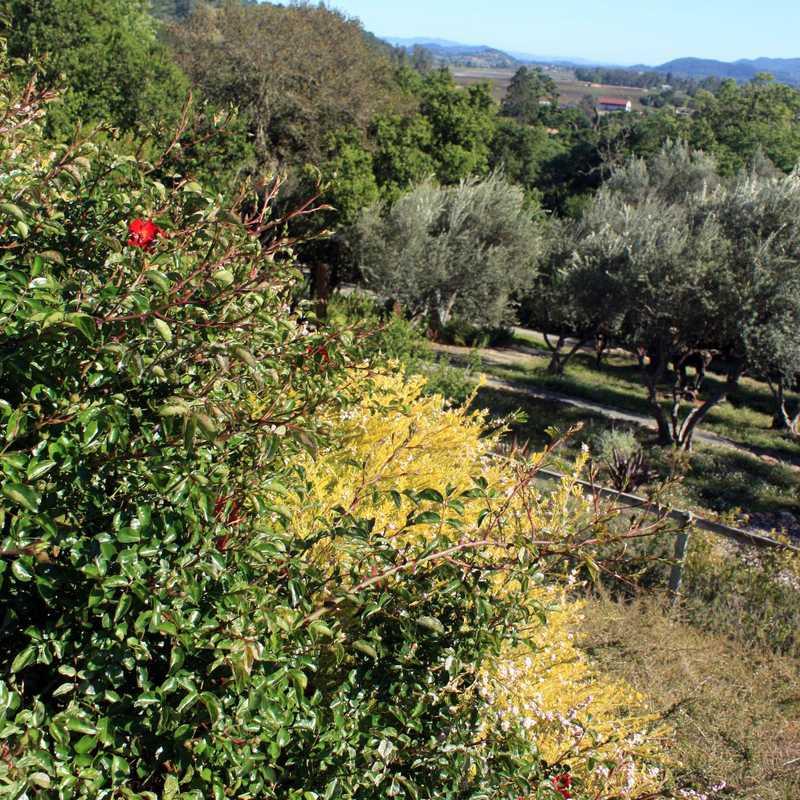 Beautiful Grounds & Gardens