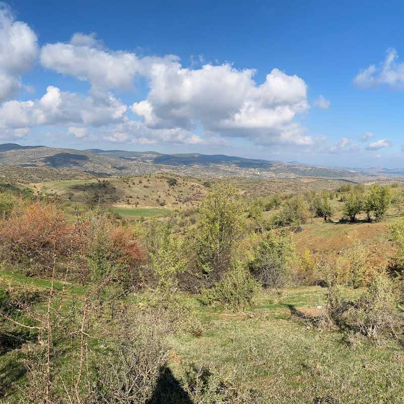 Balıbey