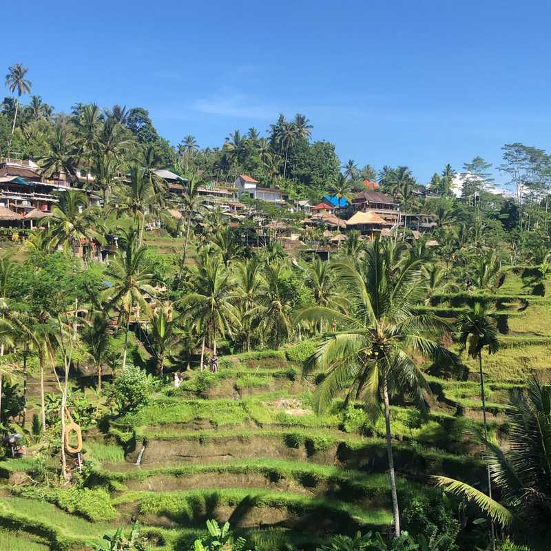 Trip Blog Post by @eclaire59: Bali 2019 | 3 days in Feb (itinerary, map & gallery)