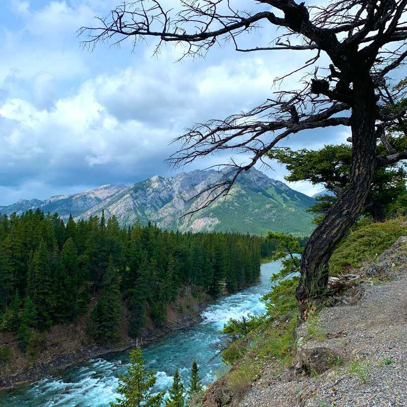 Bow River Trail