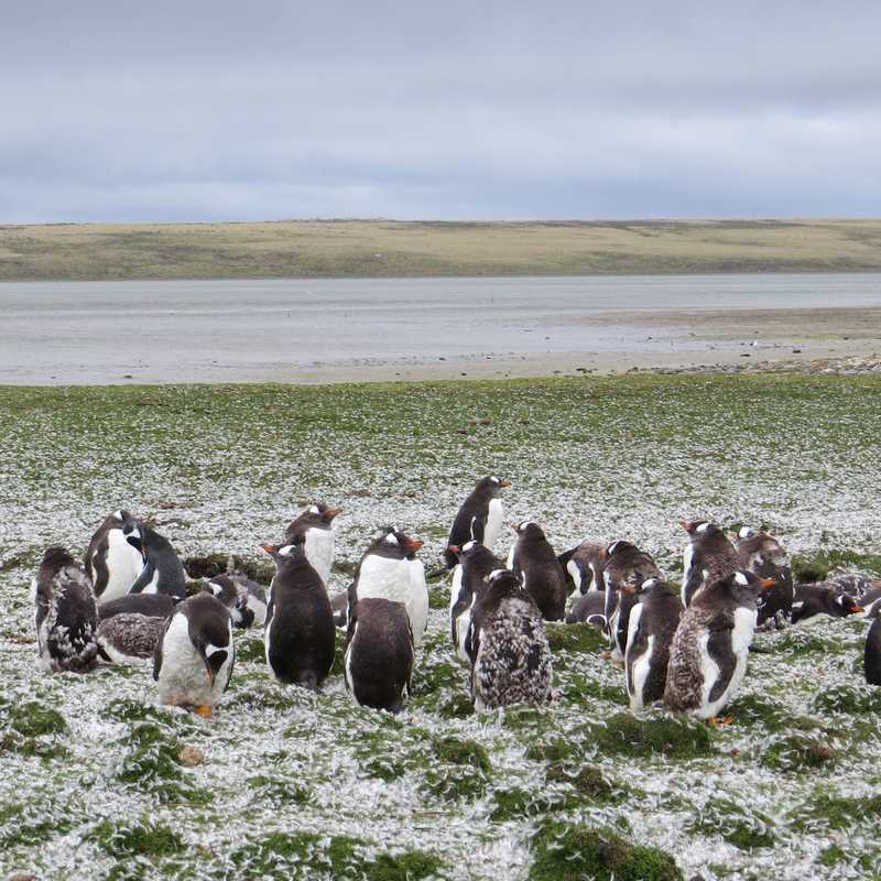 Trip Blog Post by @fpvdberg: Argentina & Falkland Islands 2017 | 6 days in Jan/Mar (itinerary, map & gallery)