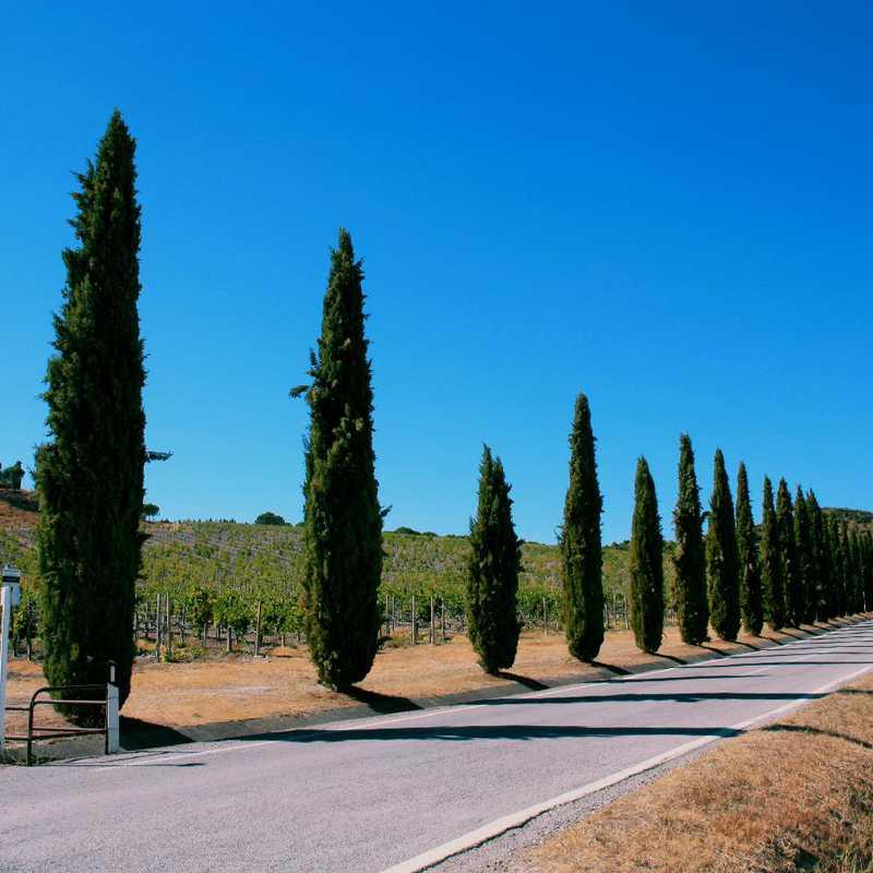 Drive from Orvieto to Banfi