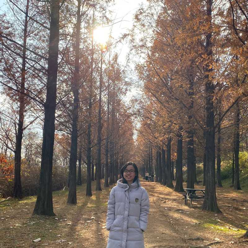 Metasequoia-lined Path