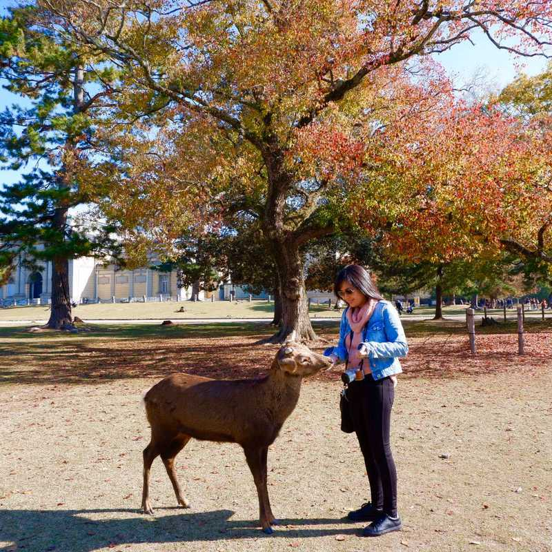 Trip Blog Post by @jadepol: Osaka - Kyoto - Nara | 5 days in Nov (itinerary, map & gallery)
