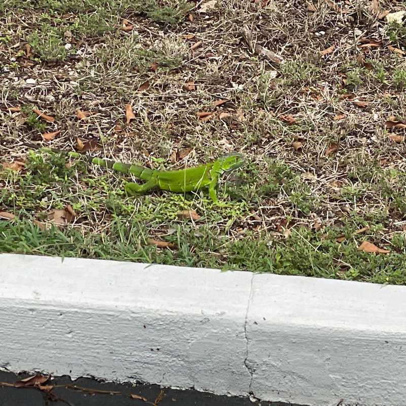 Hampton Inn Key Largo, FL