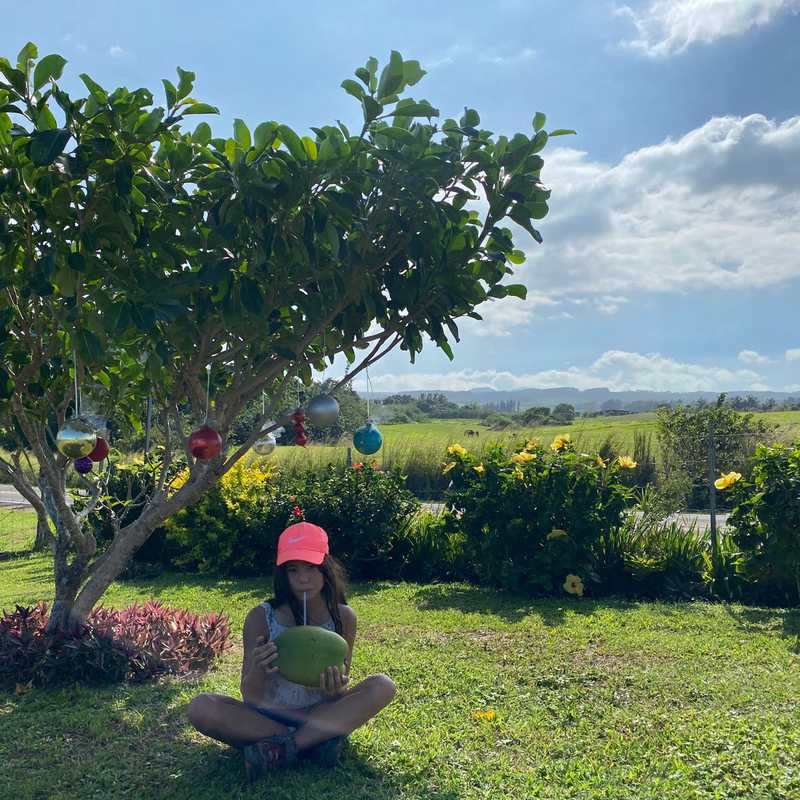 Kohala Farmstand-Fresh of the grid